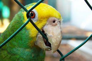 parrot-1148900-m